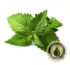 Spearmint Inawera Flavour Concentrate